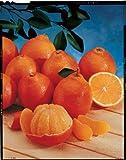 Oranges Honeybells Best Deals - Florida Honeybell Oranges (Tangelos) by Organic Mountain