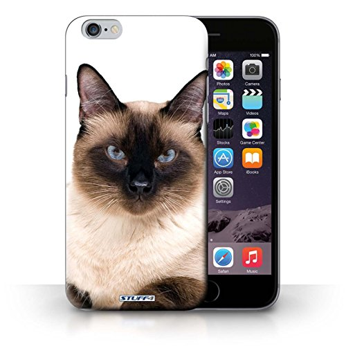 Hülle Case für iPhone 6+/Plus 5.5 / Siamese Entwurf / Katze Collection