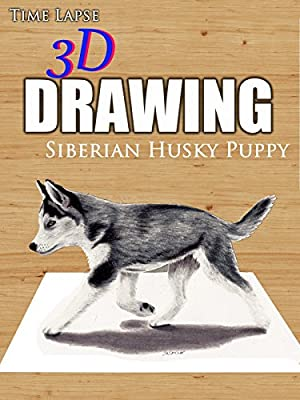 Clip: Time Lapse 3D Drawing Siberian Husky Puppy