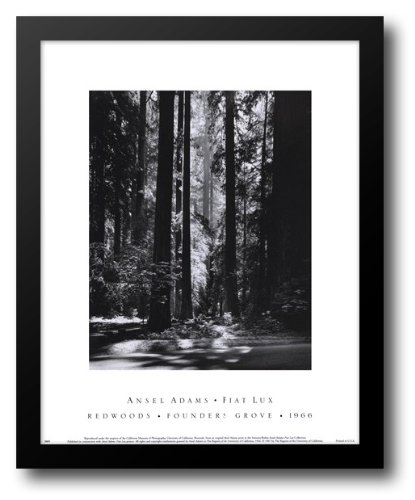 Redwoods, Founders Grove 15x18 Framed Art Print by Adams, (Redwoods Founders Grove Framed Art)