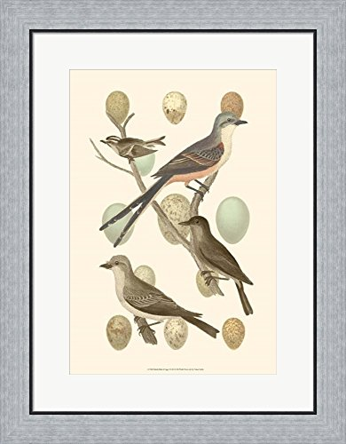 British Birds and Eggs I by Vision studio Framed Art Print Wall Picture, Flat Silver Frame, 21 x 27 inches