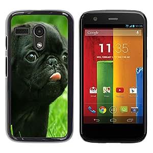 - toy poodle dog? - - Hard Plastic Protective Aluminum Back Case Skin Cover FOR Motorola Moto G 1ST Gen XT1028 XT1031 Queen Pattern