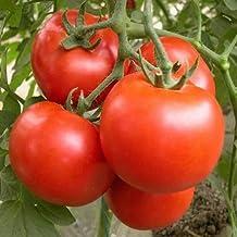 [Free Shipping] 10PCS Brandywine Tomato Seeds Garden Fruit Vegetable Seeds // 10pcs graines brandywine de tomates fruits de jardin semences de légumes