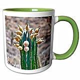 3dRose Danita Delimont - Cacti - Pachycereus pringlei, Cardon cactus, Baja, Mexico - SA13 MWI0043 - Mark Williford - 11oz Two-Tone Green Mug (mug_141610_7)