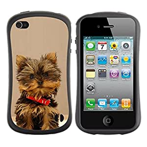 Paccase / Suave TPU GEL Caso Carcasa de Protección Funda para - Yorkshire Terrier Dog Small Brown Furry - Apple Iphone 4 / 4S