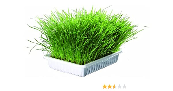 Trixie Bandeja Bio hierba para gatos, aprox.100 g: Amazon.es: Productos para mascotas