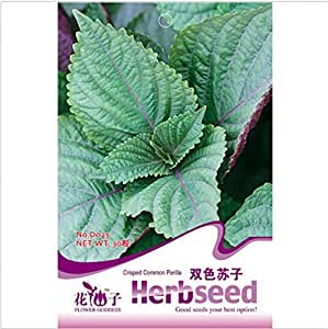 High Quality 30 Pcs Perilla Seed Japanese Shiso Frutescens Garden Supplies Perilla Seeds Double Color