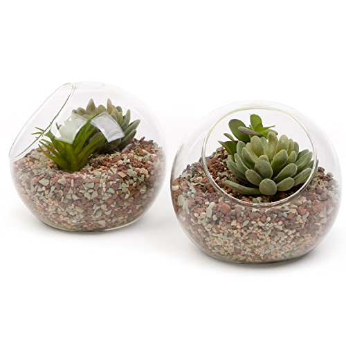 6 Inch Glass Ball Terrarium, Tabletop Air Plant Display Globe, Set of 2