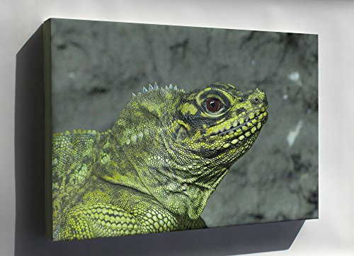Canvas 24x36; Sailfin Lizard (Hydrosaurus Pustulatus) In Helsinki Tropicario Zoo