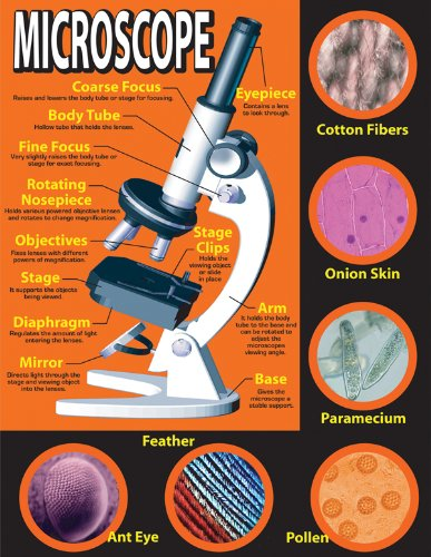 Designer Parfums Ltd - Carson Dellosa Mark Twain Basic Microscope Chart (414017)