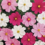 Park Seed Sonata Mix Cosmos Flower Seeds