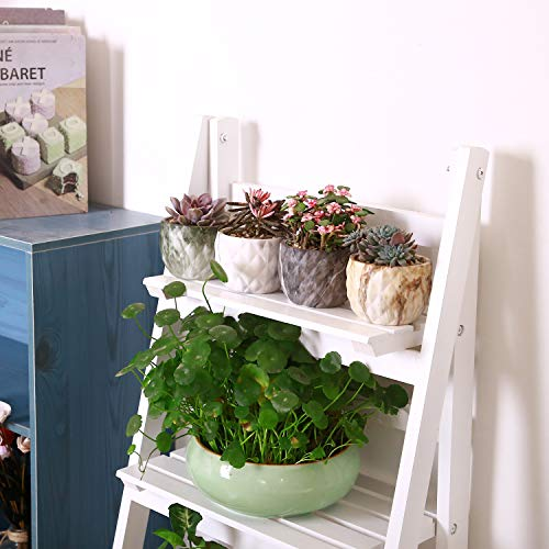 Brighten up your desk with succulents