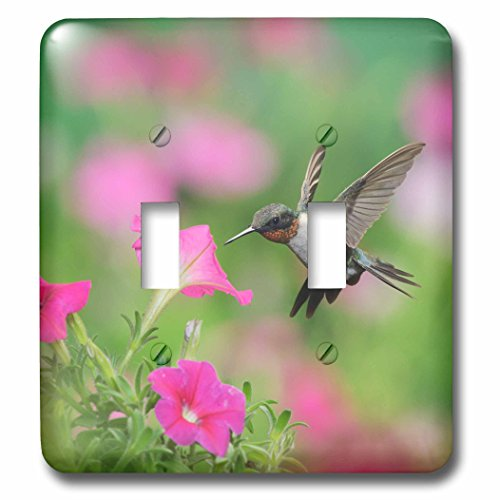 3dRose Danita Delimont - Hummingbirds - Ruby throated Hummingbird male at Petunia flowers, Hill Country, Texas - Light Switch Covers - double toggle switch ()