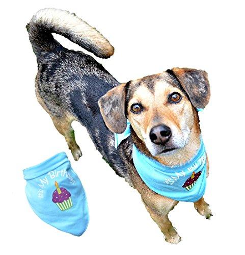 Birthday Bandana for Dogs (XS/SMALL, BLUE) -