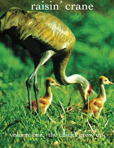 Crane Chick - 7