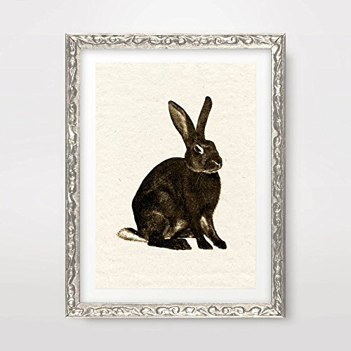 BUNNY RABBIT VINTAGE ANIMAL ILLUSTRATION DIAGRAM DRAWING ART PRINT Poster Antique Sepia Neutral Home Decor Design Wall Picture A4 A3 A2 (10 Size Options)