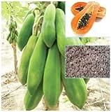 Thai Papaya Seeds Hybrid Variety Dwarf Fruit 50 Seeds Packet
