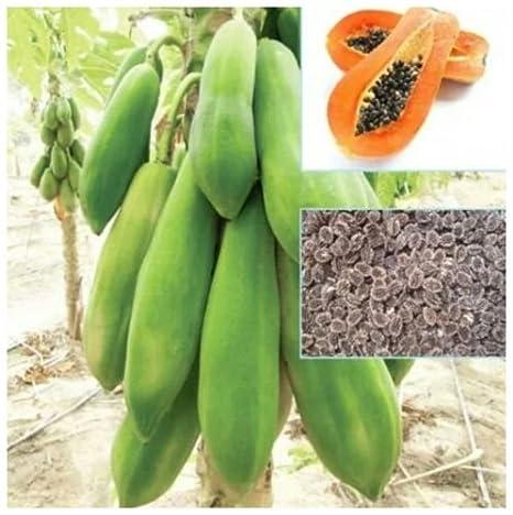 Thai Dwarf Papaya Seeds Free Post With Tracking