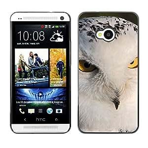 Print Motif Coque de protection Case Cover // M00313747 Lemur lémures de cola anillada // Samsung Galaxy Nexus GT-i9250 i9250