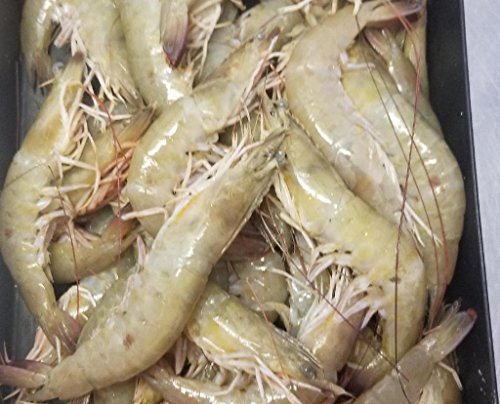 Fresh Florida Gulf Shrimp Jumbo 10-20 per pound. head-on 2.5 LBS shipped frozen