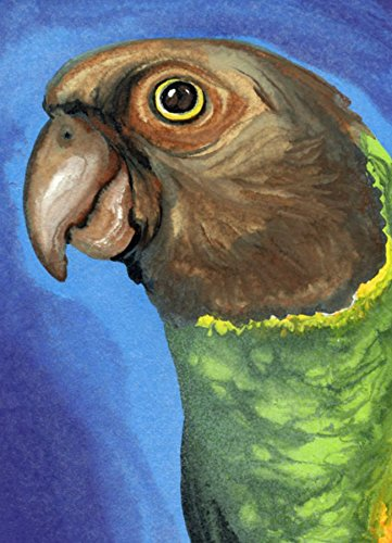 Aceo Bird - ACEO ATC Senegal Parrot Original Bird Art-Carla Smale