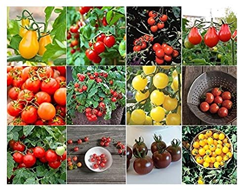 David's Garden Seeds Collection Set Tomato Cherry NEP933V (Multi) 600 Seeds (Open Pollinated, Heirloom, Organic) by David's Garden Seeds