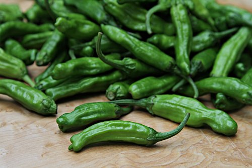 Shishito Pepper Plants Combo Pack! by Refining Fire Chiles