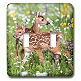 3dRose lsp_279127_2 USA, Minnesota, Sandstone, Two Fawns Amidst Wildflowers Toggle Switch, Mixed