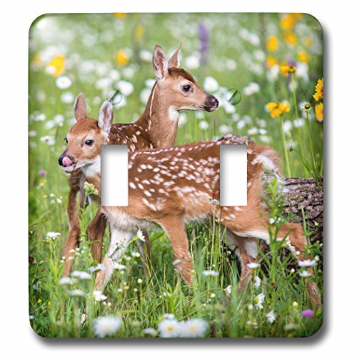 3dRose Danita Delimont - Baby animals - USA, Minnesota, Sandstone, Two Fawns Amidst Wildflowers - Light Switch Covers - double toggle switch (lsp_279127_2)