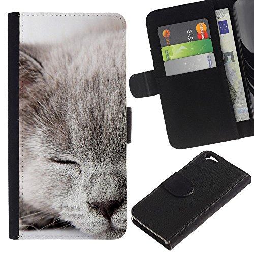 EuroCase - Apple Iphone 6 4.7 - grey Scottish fold british shorthair cat - Cuir PU Coverture Shell Armure Coque Coq Cas Etui Housse Case Cover