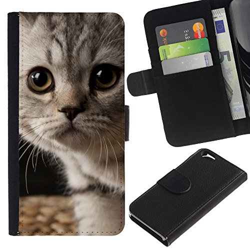 EuroCase - Apple Iphone 6 4.7 - kitten American shorthair wirehair - Cuir PU Coverture Shell Armure Coque Coq Cas Etui Housse Case Cover