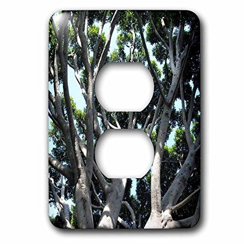 Henrik Lehnerer Designs - Nature - Old Fig Tree in Santa Barbara near the train station. - Light Switch Covers - 2 plug outlet cover - Barbara Santa Outlets