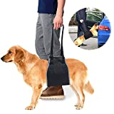 roadwi Dog Lift Support & Rehabilitation Harness, Oxford and Nylon Pad with Reflective Stitching