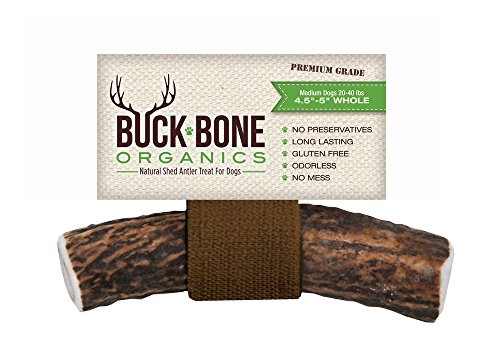 513Ei6J7zRL - Buck Bone Organics Elk Antler Dog Chews by, All Natural Healthy Chew For Medium Dogs, From Montana, Made in the USA - MEDIUM SIZE