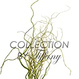 Fresh Curly Willow Tips Design Arrangement Filler Flexible Long Lasting California Grown Home Decor