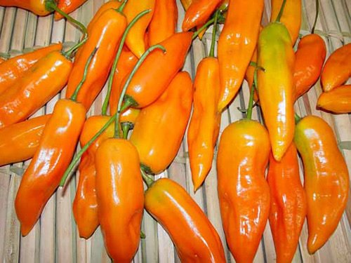 Aji Amarillo Pepper Seeds 15 Pack - Organic (Non-GMO) by - Pepper Aji Amarillo