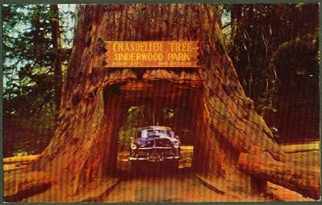 Hudson thru Chandelier Tree Underwood Park CA postcard 1950s at ...