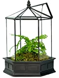 Cheap H Potter Six Sided Glass Terrarium Wardian Case Plant Container Succulent Planter