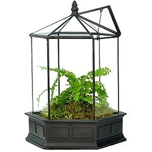 H Potter Glass Terrarium Succulent Planter Wardian Case Plant Container Six Sided WAR151