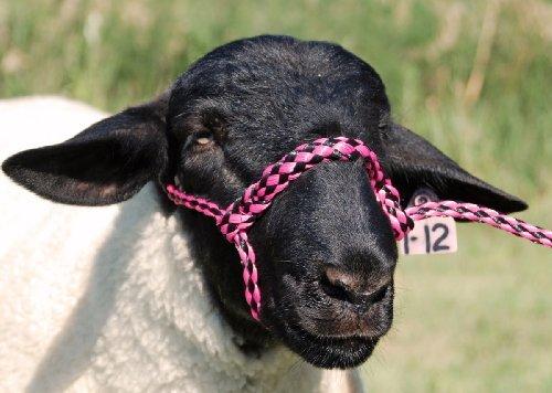 Weaver HLTR Poly Rope ADJ Sheep F.PK/BK - Halter Adj