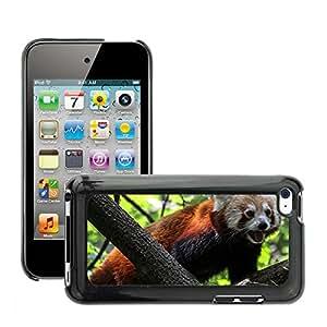 Cas Coq Case Cover // M00147080 Panda Ailurus fulgens Red Panda // Apple ipod Touch 4 4G 4th