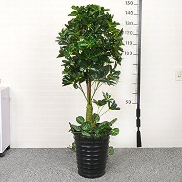 Das Geld Baum Baum Baum Blumen große falsche grüne Pflanze ...