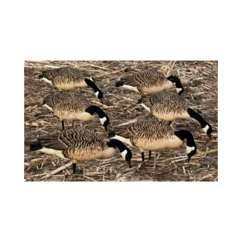 Image of Avian-X Flocked Honkers Canada Goose Decoys 6 Pack Decoys