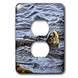 3dRose LSP_230701_6 USA, Hawaii, Oahu, North Shore, Beach, Green sea Turtle Plug Outlet Cover
