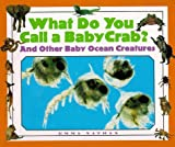 What Do You Call a Baby Crab?, Emma Nathan, 1567113656