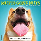 Mutts Gone Nuts 2020 Wall Calendar