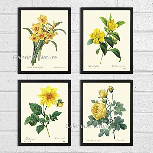 Butterfly Garden Print - Botanical Print Set of 4 Antique Beautiful Redoute Roses Pink Yellow White Butterfly Garden Nature Plant Flowers Home Room Decor Wall Art Unframed