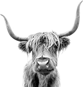 Highland Long Haired Cow Scotland Horns Close Up Face Portrait Animal Photo Cool Wall Decor Art Print Poster 24x36