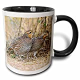 3dRose (mug_146840_4) Northern Bobwhite quail bird emerging from cover - US44 LDI0714 - Larry Ditto - Two Tone Black Mug, 11oz