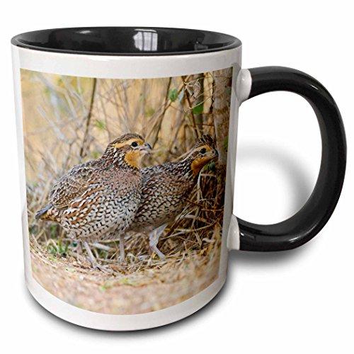 Bobwhite Quail - 3dRose (mug_146840_4) Northern Bobwhite quail bird emerging from cover - US44 LDI0714 - Larry Ditto - Two Tone Black Mug, 11oz